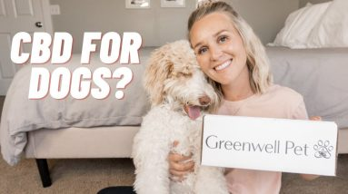CBD for Dogs - Sharing CBD products and CBD benefits for dogs | Torey Noora