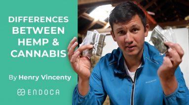 Differences Between Hemp & Cannabis