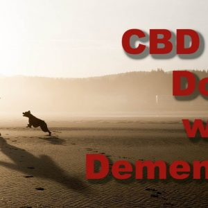 Does CBD Help Dogs with Dementia?