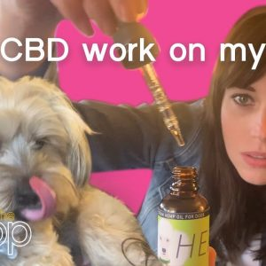 Does CBD Work On My Dog? | The Scoop