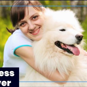 Best Organic CBD Oil for Dogs With Cancer Alt-Top 10 Benefits! Organic CBD Oil For Dogs With Cancer