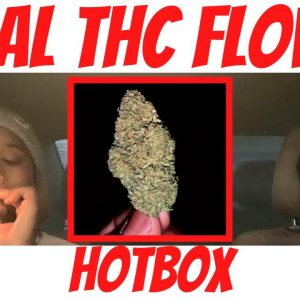 Delta-8 THC Flower in a King Palm Hot Box - Rocket Fuel🚀 from Legally Lifted