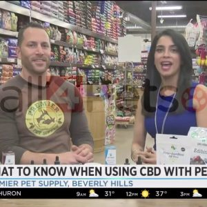 What to know when using CBD with pets