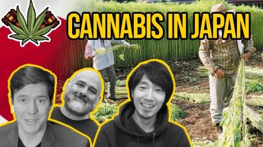 Cannabis in Japan | Is Cannabis Legal in Japan? | Marijuana in Japan | CBD in Japan