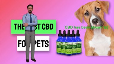 Where Can I Buy Cbd Oil For Dogs In Las Vegas - Buy Cbd Oil For Dogs Honest Video