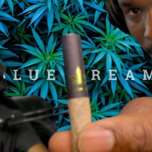 Relaxing Blue Dream Delta8 Cigs from Delta8 Factory