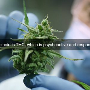 WHAT DOES THE CBD HEMP OIL CONTAIN?
