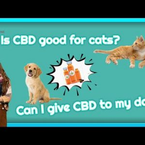 Where to buy CBD oil for dogs near me
