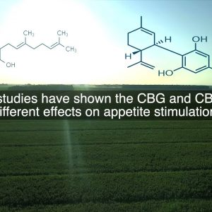 What is the difference between CBG and CBD?