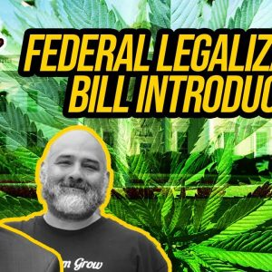 Cannabis Administration and Opportunity Act | Federal Cannabis Legalization News