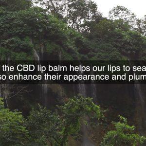 CBD Lip Balm
