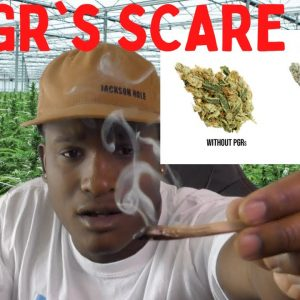 PGRs SCARE ME (GMO Ouid)