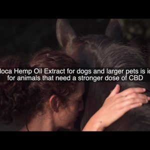 Endoca Hemp Oil Extracts For Larger Dogs And Pets