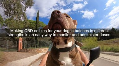 How To Choose The Right CBD Products For Your Dog And Other Pets?