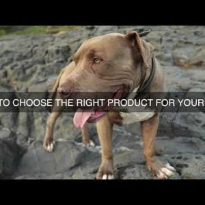 How To Choose The Right Product For Your Dog?