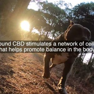 What Are The CBD Benefits For Dogs?